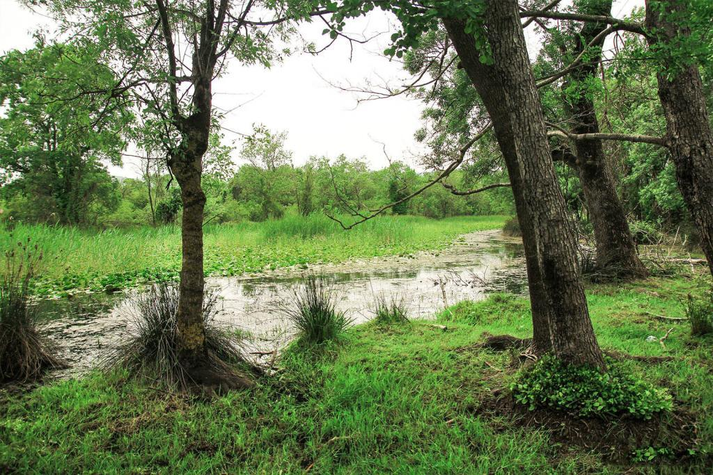 Bursa Karacabay Floodplain Forest