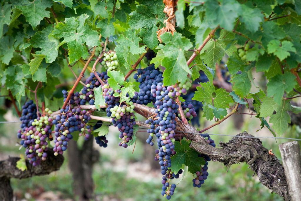 Pamukkale Winery