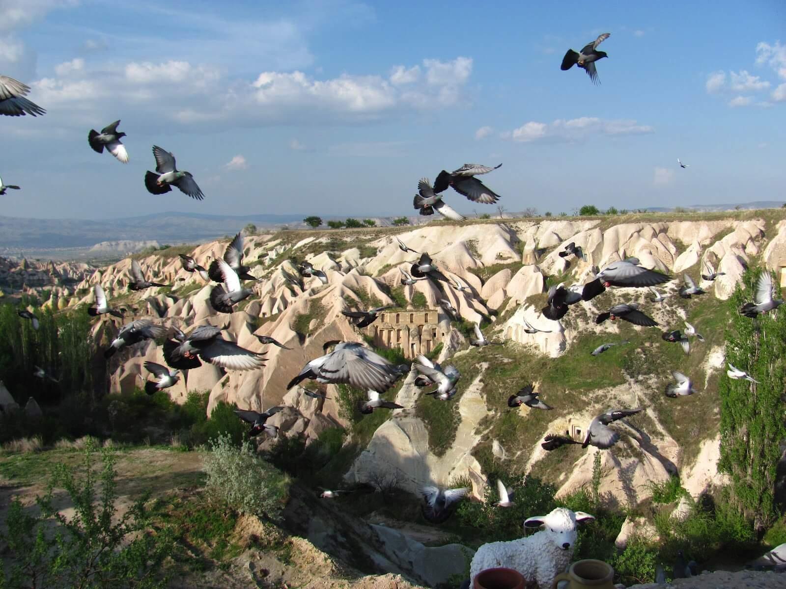 Голубиная долина (Güvercinlik Vadisi) в Каппадокии Голубиные долины Каппадокии Голубиные долины Каппадокии Pigeon Valley Cappadocia 5